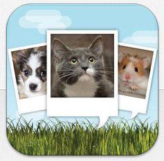 So einfach bringst Du Dein Haustier zum Sprechen – witzige Video-Animations-App gerade gratis